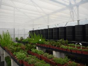 Serre bioclimatique d'Agrithermic au RATHO