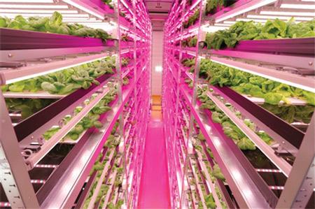 Utilisation de LED dans l'agriculture verticale